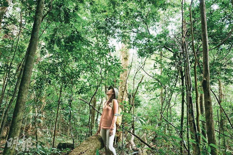慢行森林浴——來一場森林浴,打開五官,在林木中慢走。身心與大自然連結起來,有助放鬆心情,甚至達到療癒效果。(蘇智鑫攝)