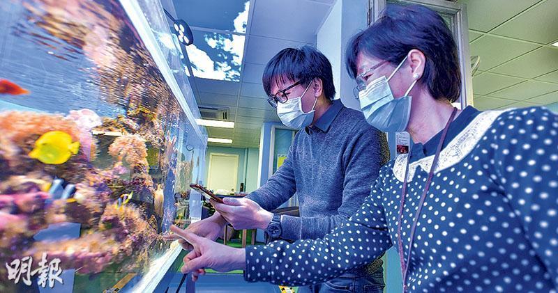 樂善堂余近卿中學實行Zoom教學,教師平日可在家直播,亦會因應教學課題轉換場景,當中一科學課教到「生物多樣性」,葉子欣(左)及張冬屏(右)移師至校內「海洋英語茶座」拍攝珊瑚實况。(黃志東攝)