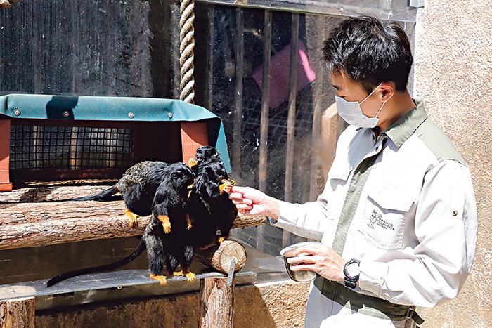 動物護理員要三心兩意 海洋公園見習員起步 與動物建互信