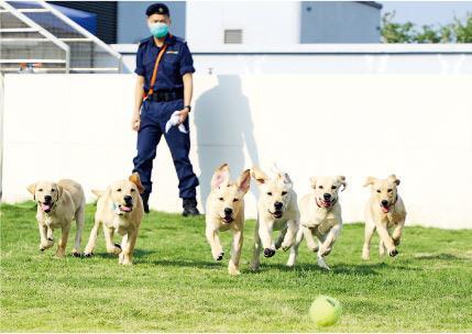 海關領犬課程獲評為QF4 相當於副學士資歷